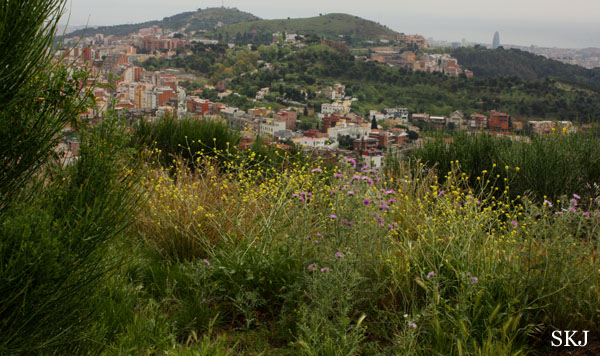 View from hilltop looking onto Barcelona city in the hills. photo by Shara Johnson