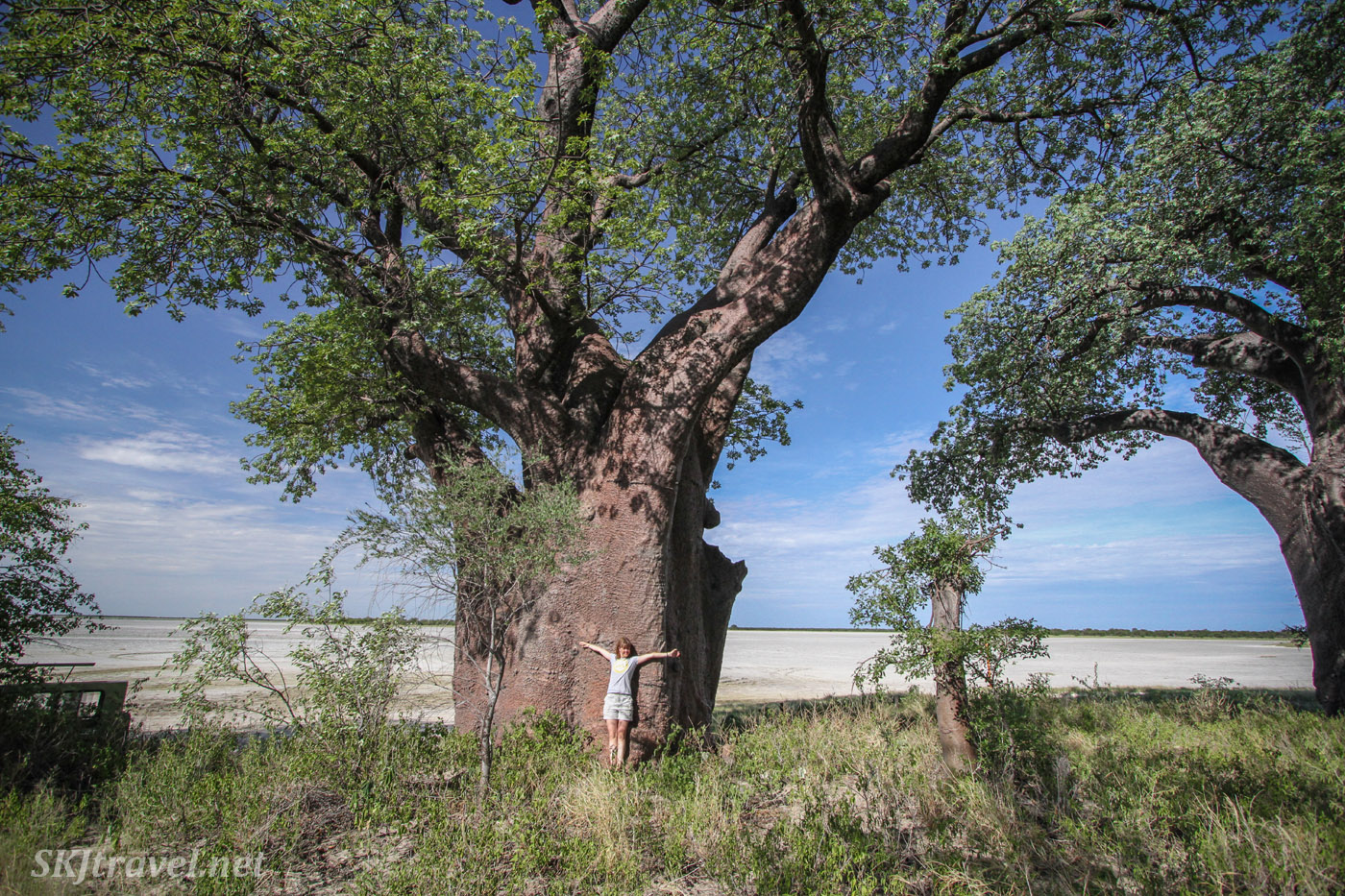Shara dwarfed by baobab tree in Baines Baobabs, Nxai Pan, Botswana.