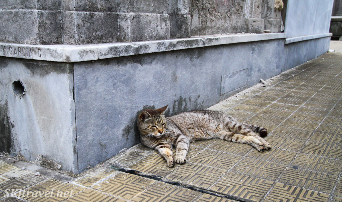 Kitty cat reclining in the Recoleta Cemetery, Buenos Aires, Argentina.