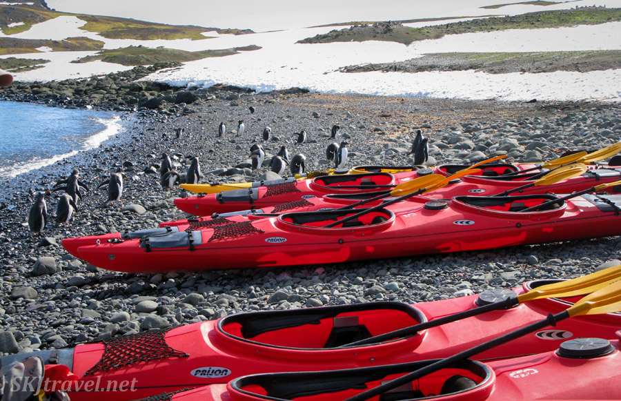 Penguins milling about our kayaks, Barrientos Island, South Shetland Islands.