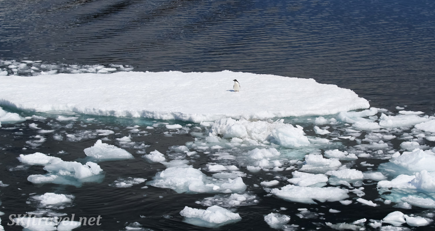 Lone penguin on floating ice in the Southern Ocean. Antarctica.