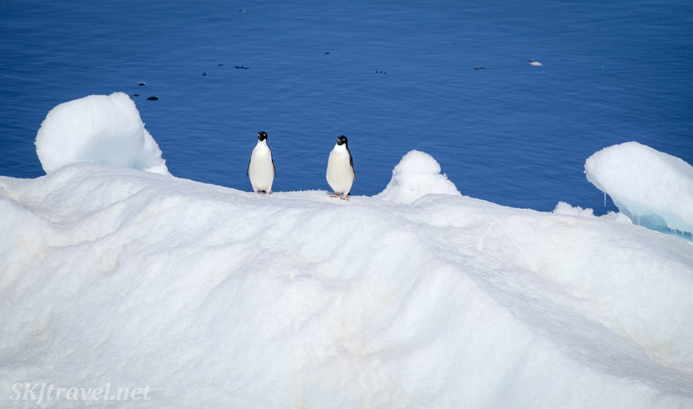 Penguin sentries on an iceberg in the Southern Ocean, Antarctica.