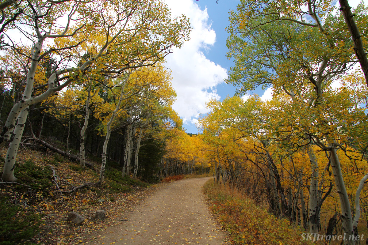 The old tracks of the Switzerland Trail of America railroad, now part of Caribou Ranch Open Space, Nederland, Colorado. Autumn aspens.