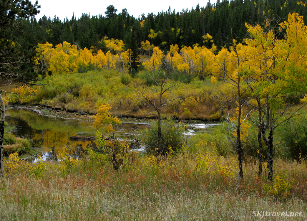 Beaver ponds in the Caribou Ranch Open Space, Nederland, Colorado.