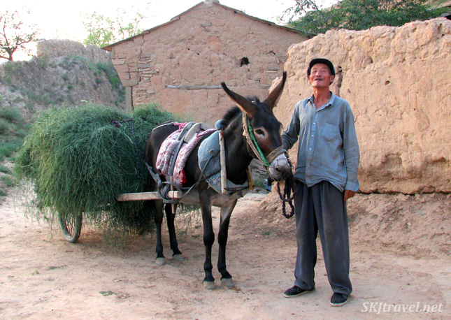 Villager in Dang Jiashan village, Shaanxi Province, China, leading his donkey home with a cart full of grass.