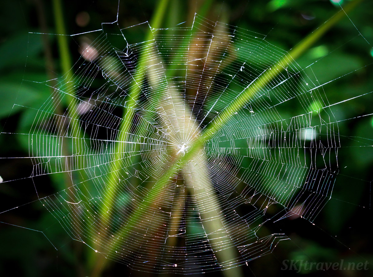 Large spider web in a ray of sunlight, El Yunque rain forest, Puerto Rico.