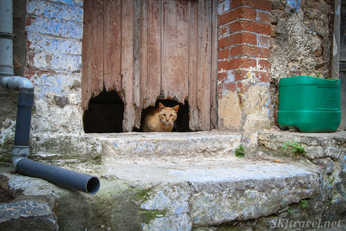 Kitty cat lying down in the doorway of an abandoned home in the old medieval village of Mesta on Chios Island, Greece.