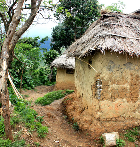 Typical thatched-roof mud huts in the lower Rwenzoris, Uganda