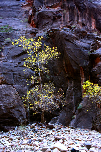 A lone tree with a few golden leaves against dark canyon wall.