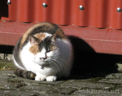 calico cat in front of red wall