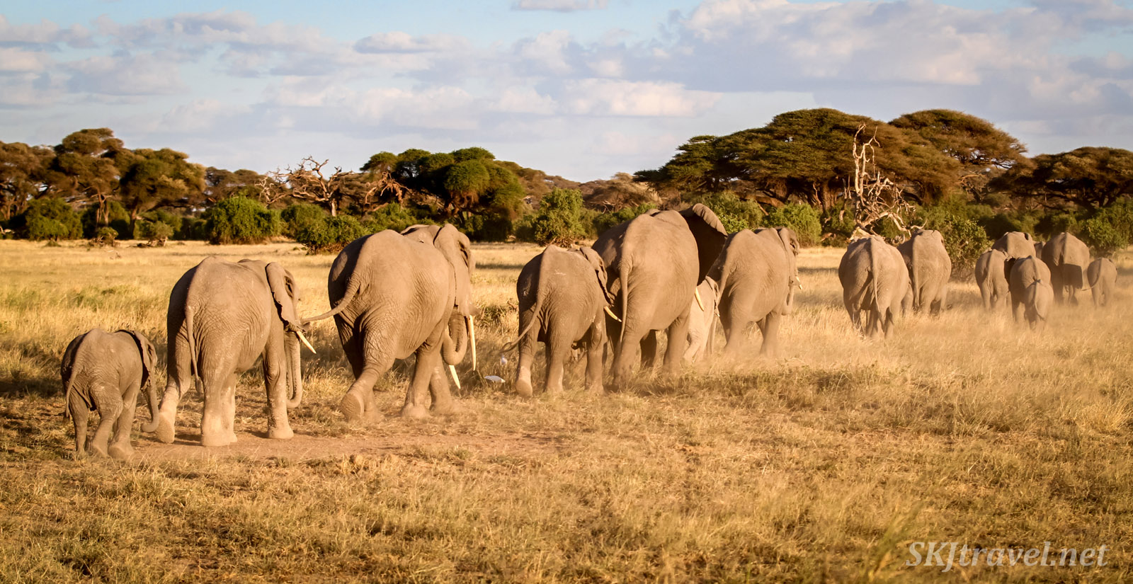 Elephants disappearing into the forest late in the day, Amboseli, Kenya.