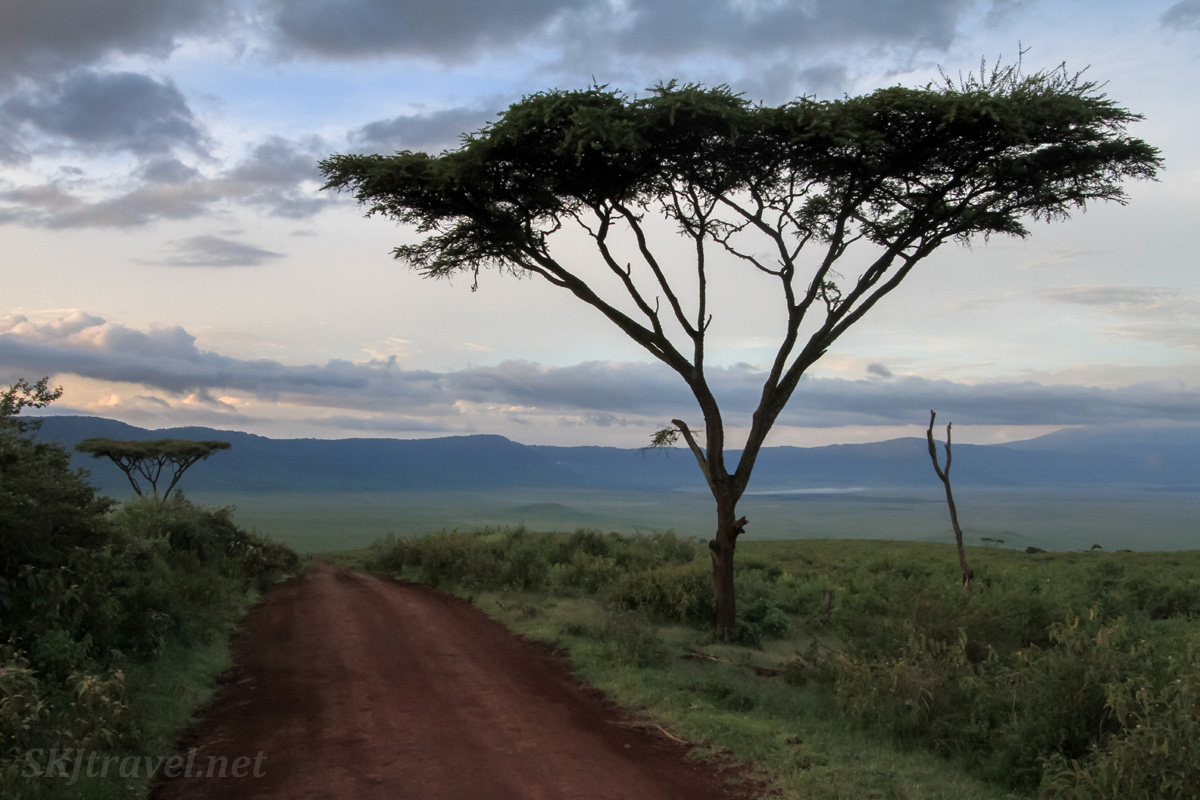 Descending into Ngorongoro Crater on the Lemala crate access road in the pre-dawn.