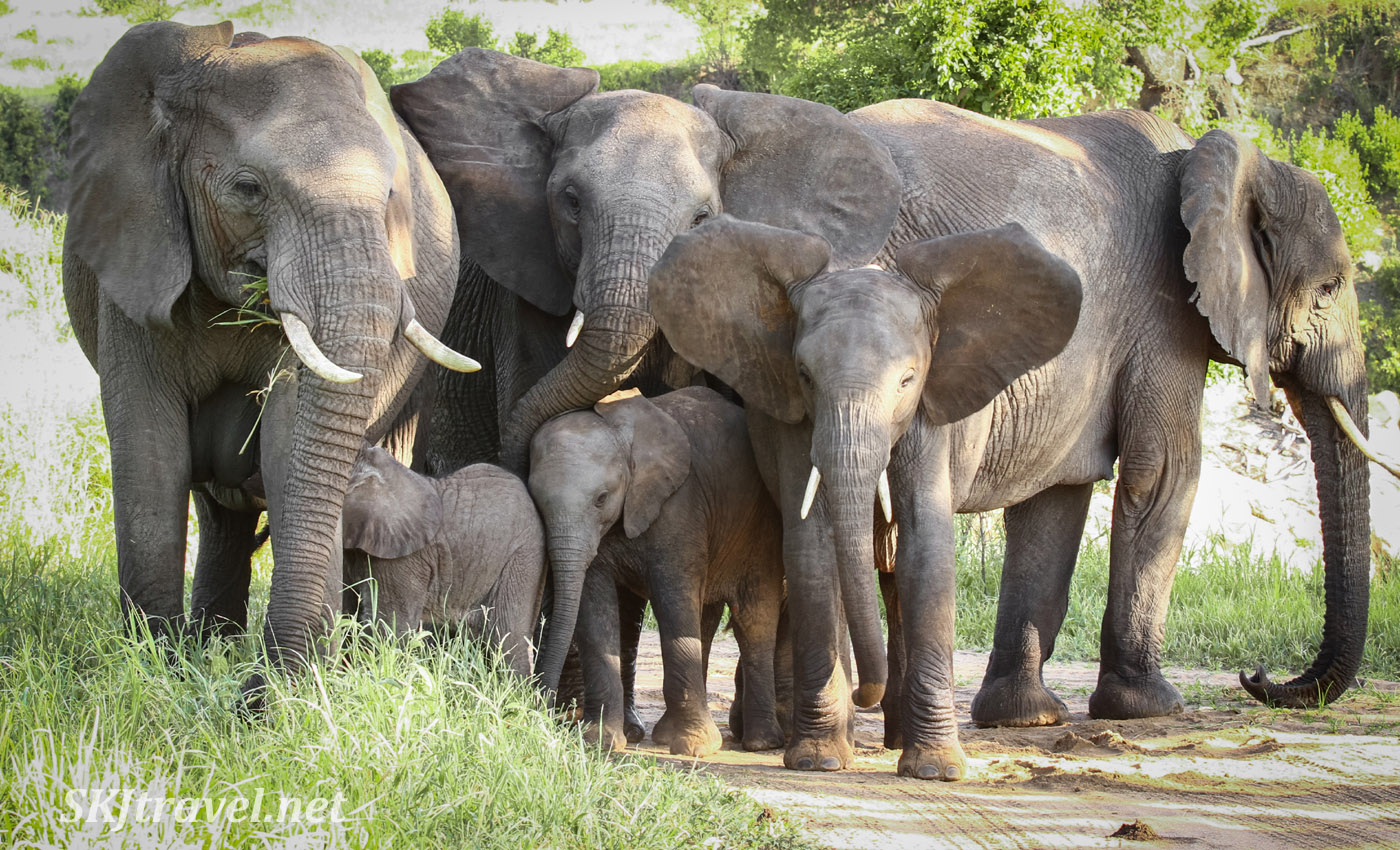 Elephant family portrait, Tarangire national park, Tanzania.