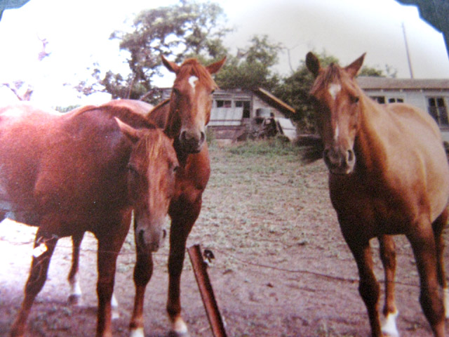 Horses on my grandparents' farm, Clarence and Beulah Maack farm, Cozad, Nebraska. 1980s.