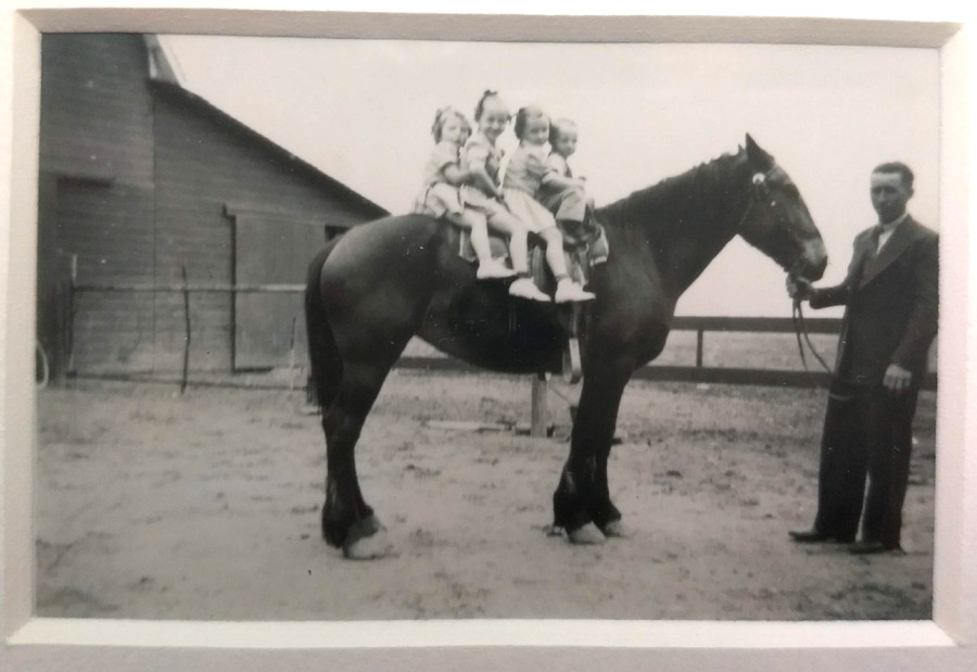 Grandpa set my mom and three siblings on a horse. Early 1940s. Cozad, Nebraska.