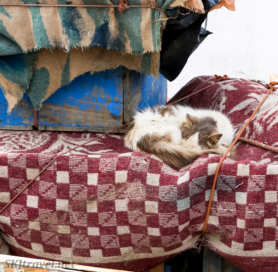 Close up of cat napping on cloth covered bins, Essaouira, Morocco.