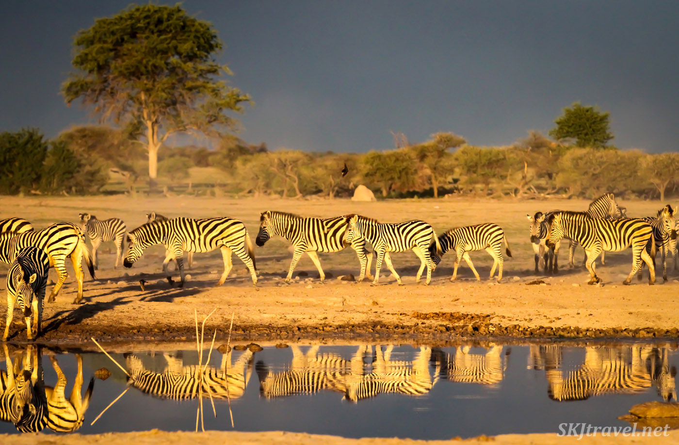 Zebras and their reflections at a waterhole in the Nxai Pan, Botswana.