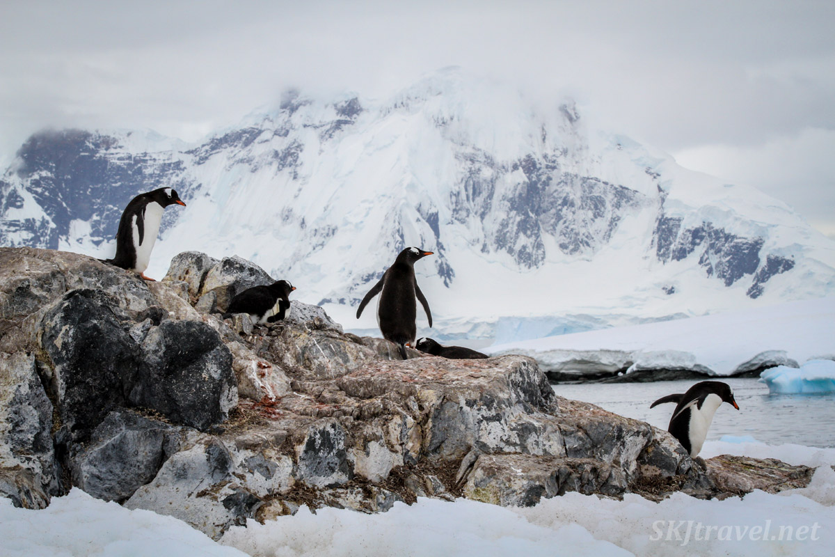 Penguins in the epic Antarctic landscape, Orne Island.