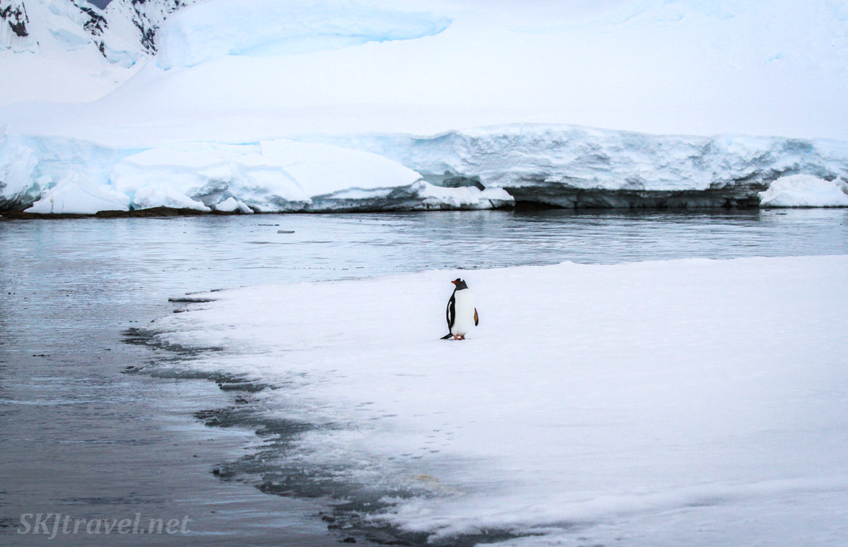 Lone penguin on sea ice at Wilhelmina Bay, Antarctica.