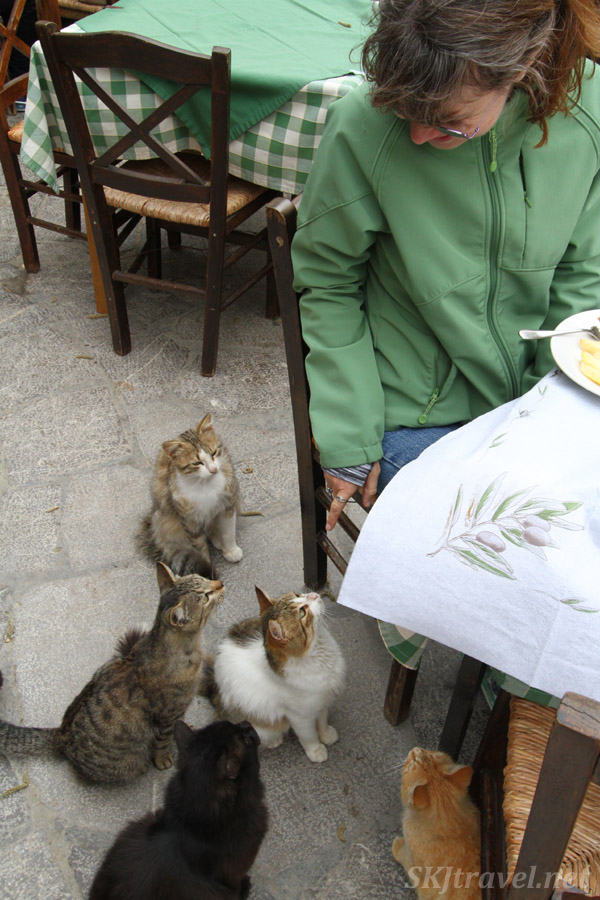 Shara's fan club of hungry kitties, Mesta village, Chios Island, Greece.