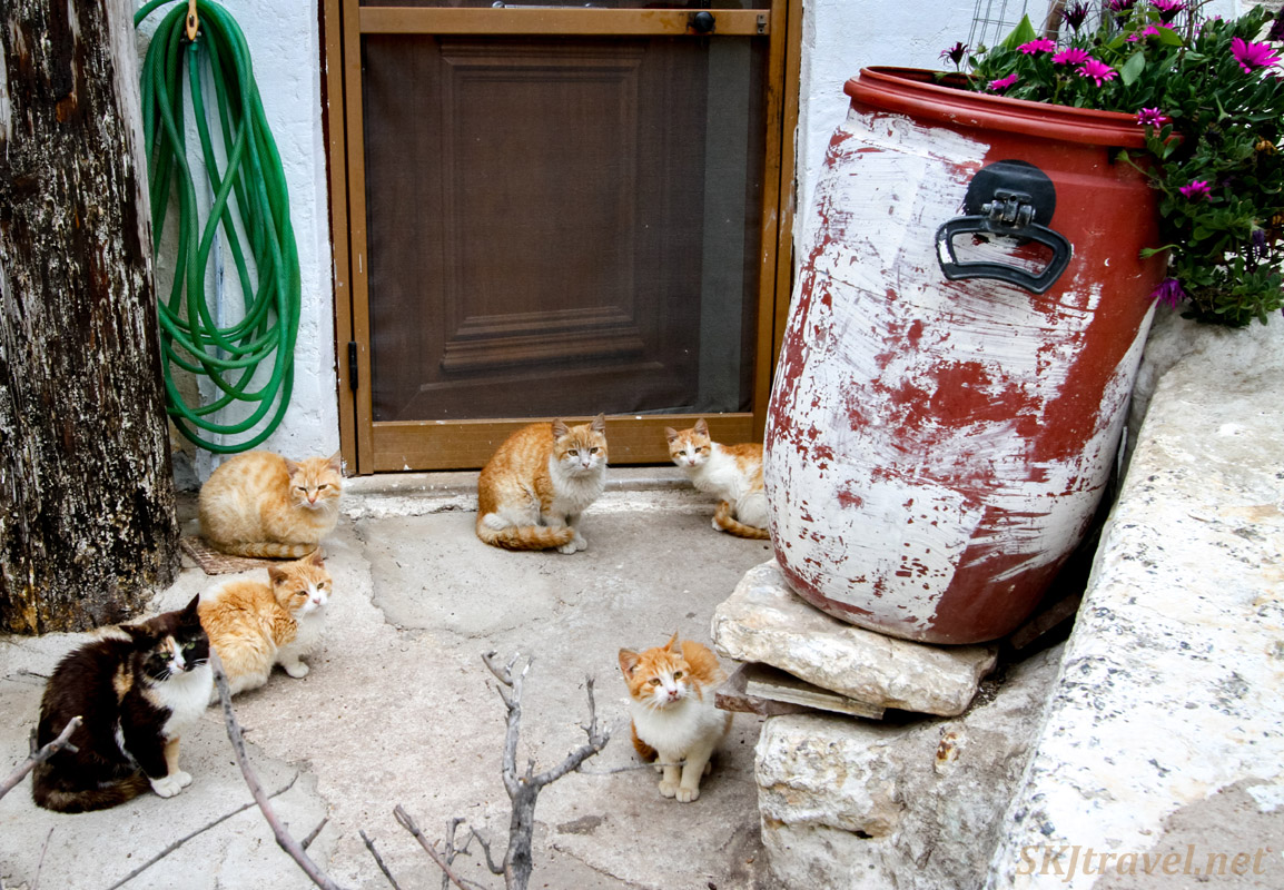 Group of cats waiting fora meal, Mesta, Chios Island, Greece.