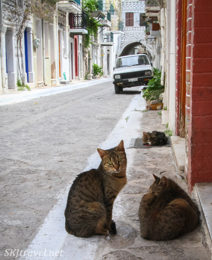 Cats sitting along the sidewalk of Pyrgi village, Chios Island, Greece.