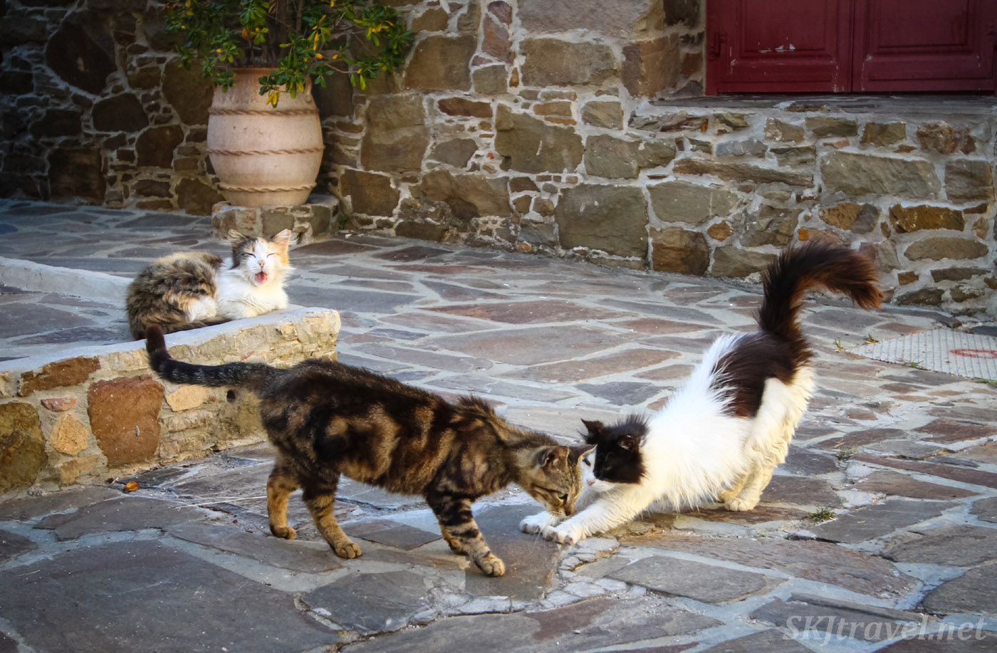 Cats playing in the cobblestone street of Volissos, Chios Island, Greece.