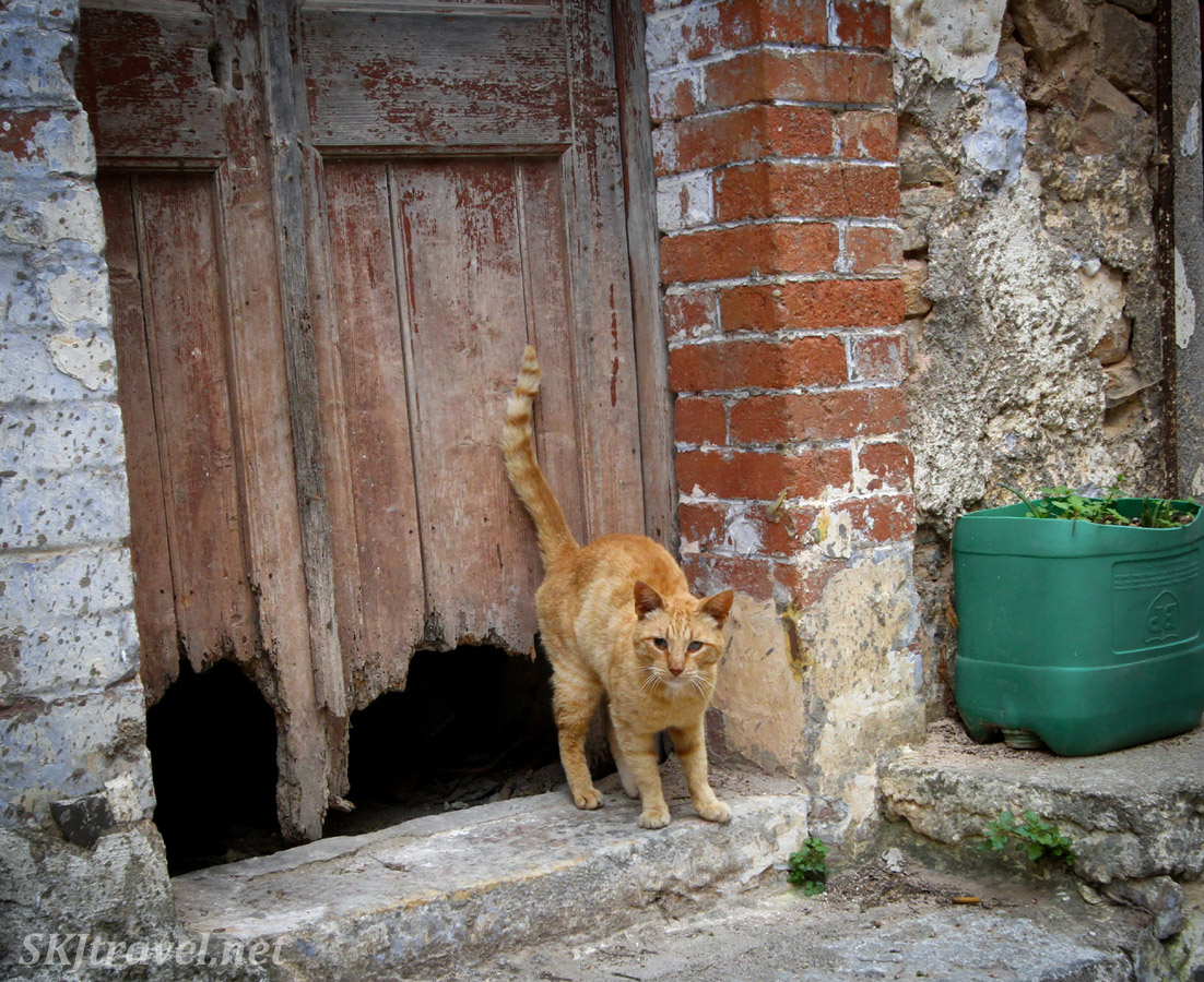 Blind kitty cat outside an abandoned home, made into him home, in the medieval mastic village of Mesta, Chios Island, Greece.