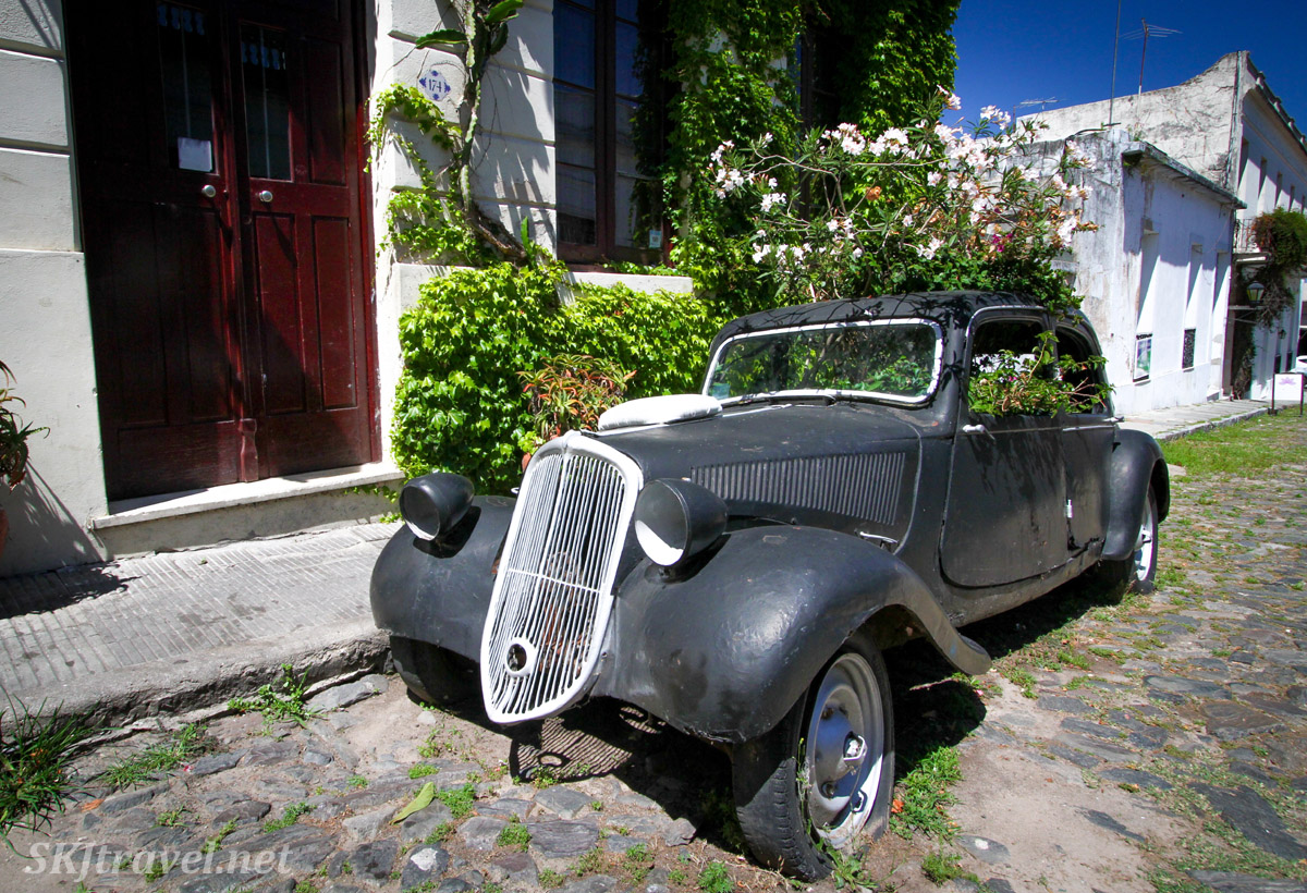 Antique car on display on a cobblestone street in Colonia del Sacramento, Uruguay. Remodeled into a planter for flowers.