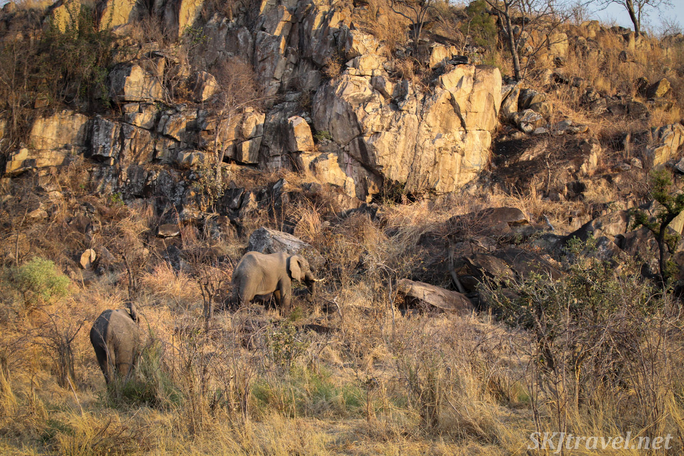 Elephants in the rocky, rugged landscape of Savuti, Botswana.