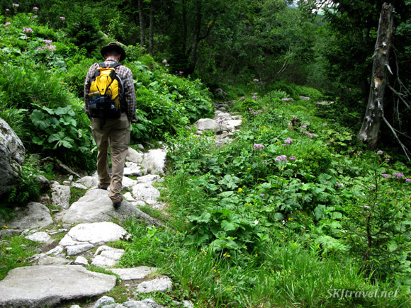 Erik walking the stone path through lush forest in the High Tatras, Slovakia.