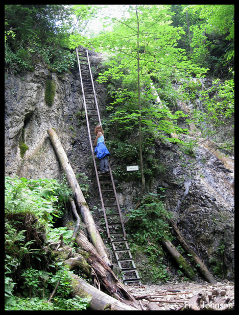 A ladder leads up the middle of the stream bed in Slovensky Raj national park, Slovakia.