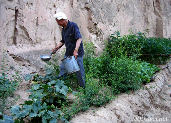 Papa carefully ladling water onto squash and other plants. Dang Jiashan village, Shaanxi Province, China.