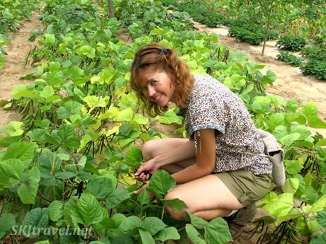 Me picking green beans in Dang Jia Shan village, Shaanxi Province, China.
