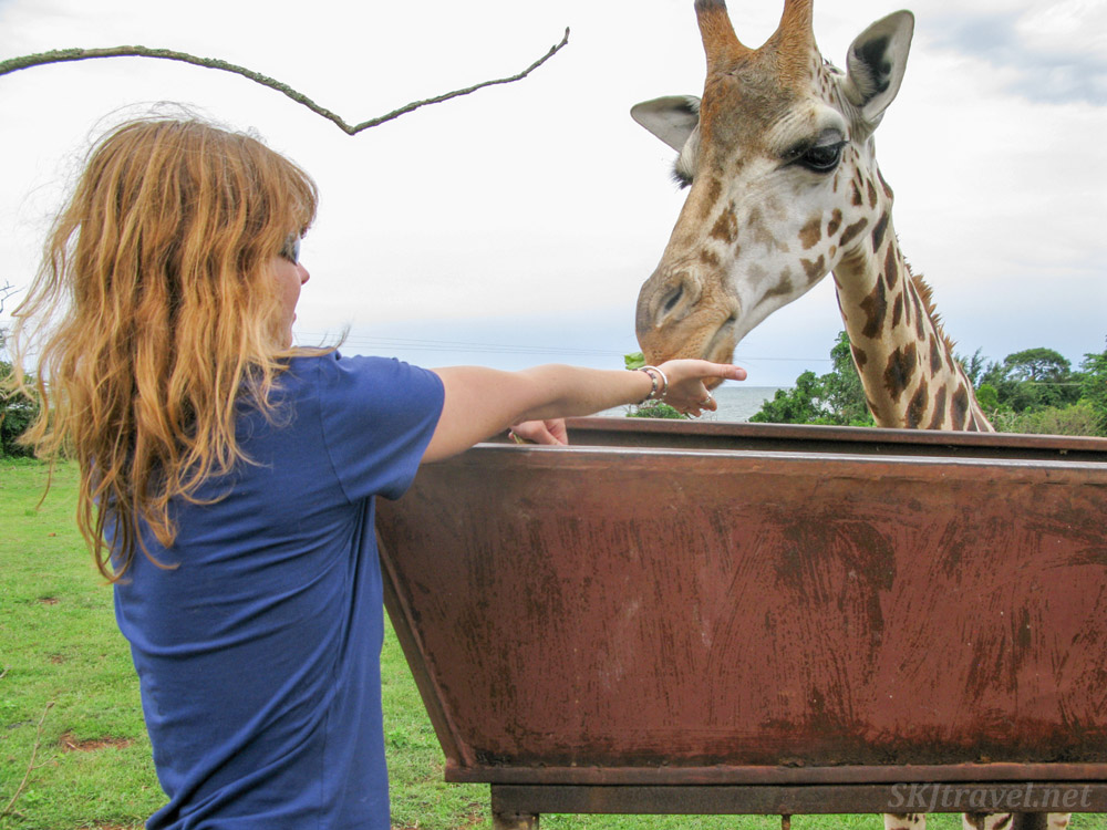 Me feeding a gentle giraffe at the UWEC.