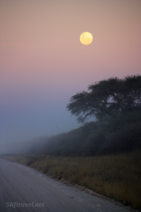 Moon in the dusty sky near Roy's Camp and the Bushmen lands, Namibia.