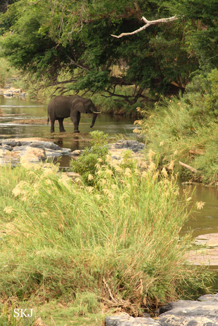 elephant standing in a river