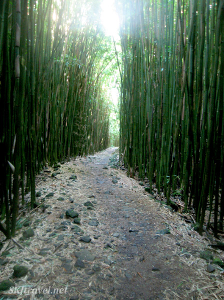 Path through a bamboo forest leading to a high waterfall on Maui, Hawaii.