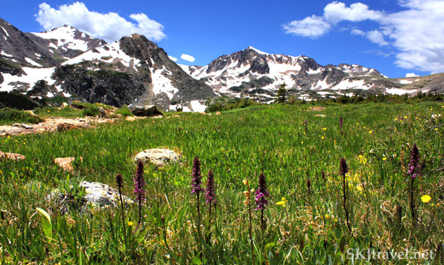 flowers in a mountain meadow with mountain peaks